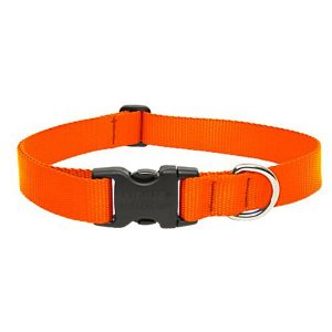 Lupine One Inch Adjustable Dog Collar