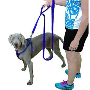 Two Loop Double Handled Dog Leash