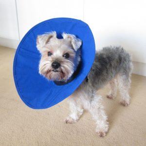 Alfie Pet by Petoga Couture – Soft Recovery Collar