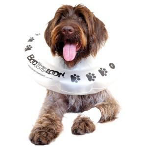 Protective Pet Collar