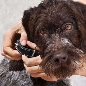 Best Dog Collar • Reviews & Buying Guide (December 2020)