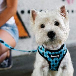 Best Dog Harness • Reviews & Buying Guide (October 2021)