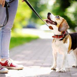 Best Dog Leash • Reviews & Buying Guide (February 2021)